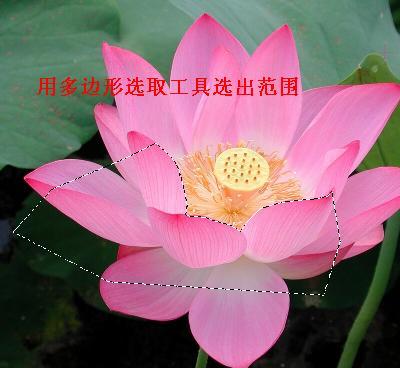 U5制作花中仙子的教程 - 理睬 - 理 睬